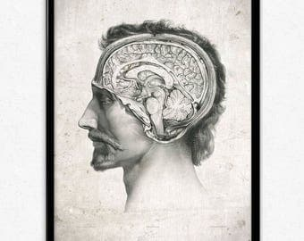 Anatomy Head and Brain Vintage Print - Anatomy Poster - Anatomy Art - Anatomy Picture - Wall Art - Office Decor - Office Art - Doctor Decor