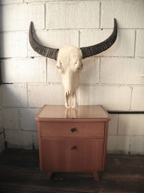 Large Buffalo Skull & Horrns