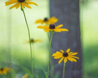 Yellow Wildflowers Print, Flower Photography, Nature Photography
