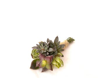 Aurora groom's Boutonniere: boutonniere Succulents in shades of roses, Bridal headpiece, succulents