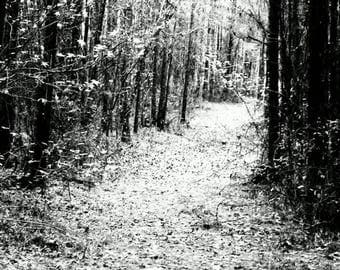 Limited Black and White Photography Print, #4, Nature/Landscape