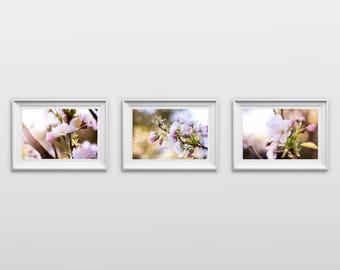 Set of 3: Cherry Blossom, Original Photography Prints, Flowers, Wall Art, Decor