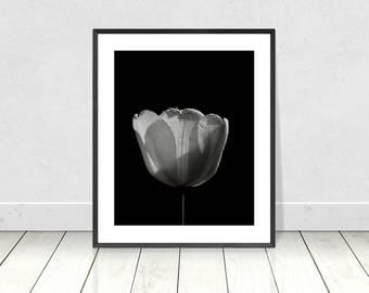 Floral Print, Black and White Print, Tulip Print, Flower Printable, Botanical Print, Nature Print, Flower Photo,Floral Art,Modern Wall Decor