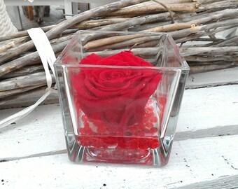 Red Rose vera gel stabilized