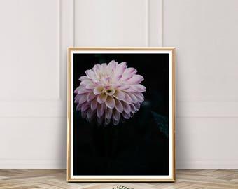 Dark Floral Photography, Flower, Botanical Poster, Ellie Cashman, Dahlia, Photo, Instant Download, Pink, Floral