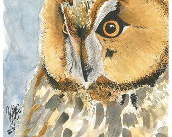 Watercolour original - Owl
