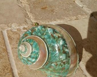 Turbo Shell -  Jade Turbo Shell - Natural Turbo - Polished Jade Seashell - Polished Jade Turbo - Pearlized Shell - No. 204