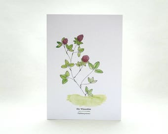 Plant Card | Red Clover | Useful Plants | Wild Herbs | Gardener Gift | Botanical Card | Plant Identification | Plant Lover | Garden Herbs