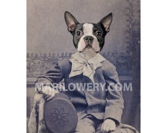 Boston Terrier Art, 5x7 Inch Print, 8x10 Inch Print, Animal in Clothes, Dog in Suit Art, Mixed Media Collage