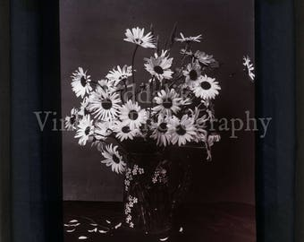 Antique Magic Lantern Slide - Lovely Still Life Study of a Vase of Daisies Flowers - Vintage Projector Slide