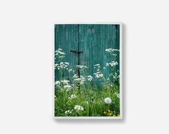 Wild Flowers, Photographic Print, Botanical Print, Wall Art, Color Print, Wall Decor, Photography Print, Art Work, Green and blue, Art Print