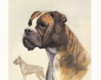 Boxer portrait German dog breed vintage print illustration gift for dog lover owner portrait by Willy E. Bär 8x11.5 in