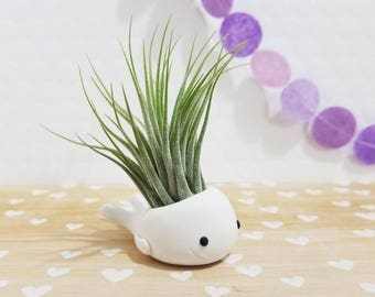White Whale Air Planter, Modern Planter, Whale Plant Holder, Green Thumb, Mini Planter, Coworker Gift, Air Plant Holder, Best of Spring Gift