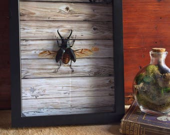 Real Beetle Frame // Rustic Home Decor // Creepy Gift // Oddities and Curiosities // Weird Taxidermy