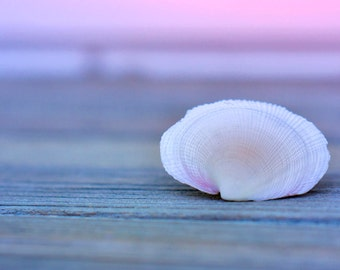 Seashell wall art, seashell bathroom decor, nautical wall decor, seashell photography, seashell bathroom art, sea shell photo print