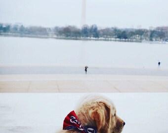 Washington Nationals Dog + Cat Bow Tie