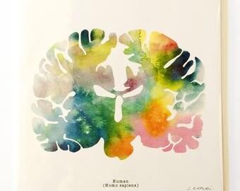 "Human Brain Watercolor Brain Print - 12"" x 12"" Brain Art - Neurology and Psychology Art - Neuroscience Illustration Prints - Brain Artwork"