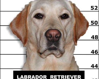 Poster, Many Sizes Available; Labrador Retriever
