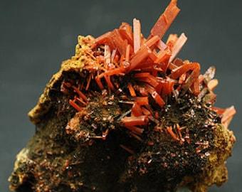 Crocoite crystals on matrix, Tasmania - Mineral Specimen for Sale