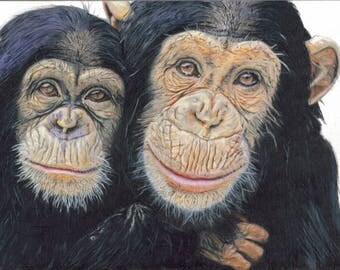 Two monkeys, drawing done in colored pencils