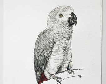 Gray Parrot *Original*