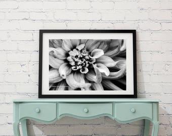 Black and White B & W Dahlia Digital Fine Art Photography Instant Download Digital Download Wall Art Print Canvas Flower Canvas Flower Print