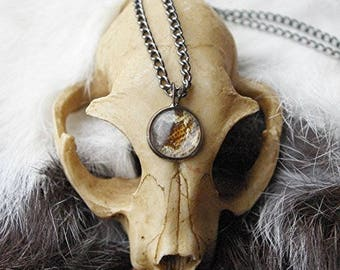 Real Snake Skin Necklace - Corn Snake Pendant - Cornsnake Necklace - Gunmetal, Black, Silver or Bronze Available