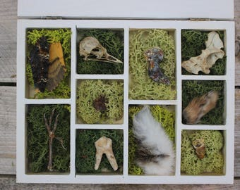 Taxidermy Natural History Collection Curio Box - Skull/Mummified/Animal Bones/Curosity/Oddity/Pagan/Witch/Dead Things