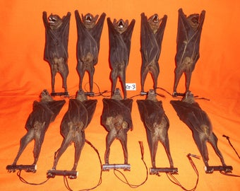 Taxidermy Real Bat Large Mummified 10 Pcs