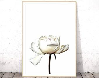 Roses Print, Floral Wall Art, Botanical Print, Flower Photograph, Dorm Wall Art, Flower Print, Floral Printable, White Roses, Peony Print