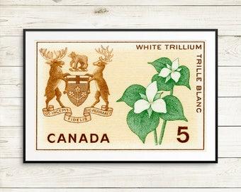 P143 Ontario, Ontario Canada, White trillium, Trilliums, Ontario flower, Ontario Arms, Province of Ontario, Toronto Ontario, Ottawa Ontario