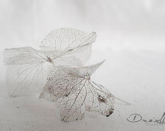 Skeleton Leaf picture. 'The fragile 4.2' Minimalist Abstract Fine Art Photography. Botanical Nature Macro Art Print. Original Leaf Art