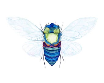 Cicada Bug Print - Watercolour Painting