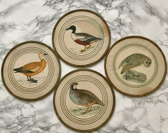 Amusing set of four framed pieces representing birds in engraving