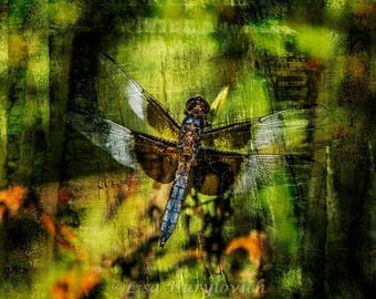 Dragonfly, summer, insect, blue, black, photograph, special effect
