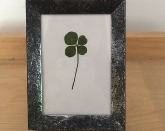 Real Four Leaf Clover in Small Black Frame (Rectangle) - Fridge Magnet and Stand