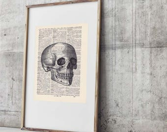 Print Skull No. 4-On Antique page