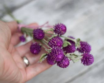 Small Bunch Purple Dried Globe Amaranth, Purple Dried Gomphrena, Purple Clover Flowers
