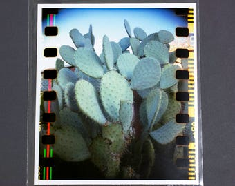 "Fine Art Photography ""Cacti"" Archival Print"