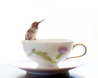 Tea for One ii, Hummingbird Print