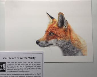 Limited Edition 'Parker' Fox Print Artwork Picture
