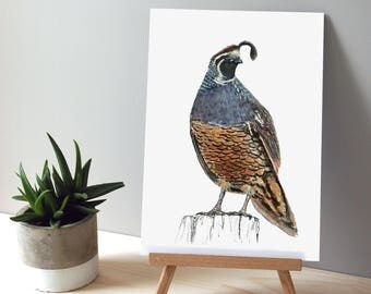 Quail illustration, Large print from original watercolor and ink painting artwork, Wild life art
