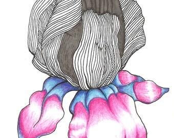 Flower Illustration Print