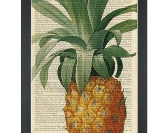 Pineapple color vintage botanical drawing Dictionary Art Print