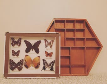 Butterfly shadow box and hexagon wood shelf
