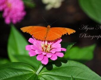 orange butterfly on beautiful pink flower