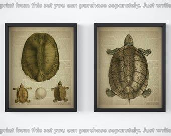 Set of 2 prints, Print set, Turtle print set, Dictionary art, Egg printable, Vintage prints, 8x10 artwork, Illustration, JPG, 11x14 wall art