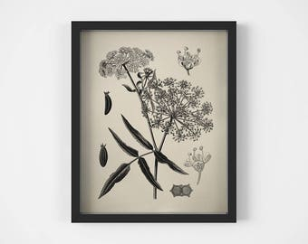 Floral print, Vintage print botanical, Digital print, Black and white print, Printable antique image, Illustration download, Poisonous plant