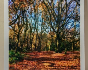 """8""""x10"""" Golden Woodland, East Sussex Photographic Print"""