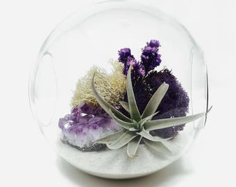 Purple Passion Amethyst Air Plant Terrarium Kit